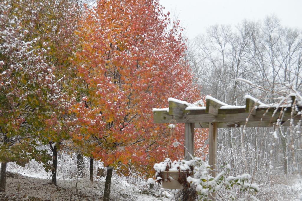 FIRST SNOW! DSC_0041_zpse2gxtuul