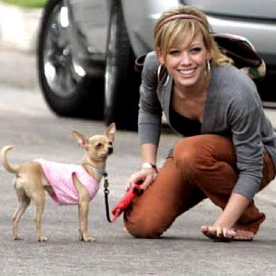 Хилари с кучетата си Hilary-duff-and-chihuahua