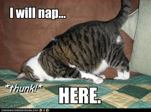 GM THOR !!  Funny-pictures-cat-will-nap-here