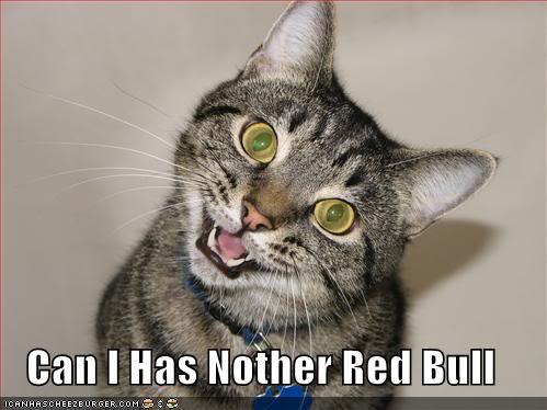 GM THOR !!  Red-bull-cat