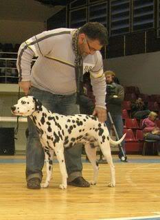 мы и собаки - Страница 2 Sh100038