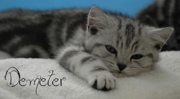 Demeter Cat DemeterSig1