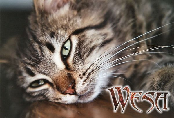 Wesa Cat - The Furred Knight Wesasig1