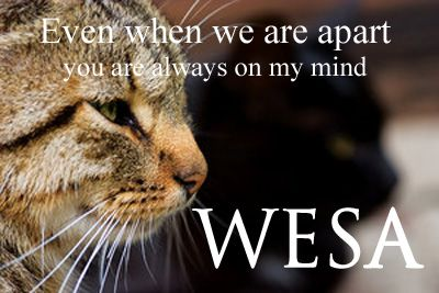Wesa Cat - The Furred Knight Wesaapart