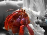 Photoshop Thread HermitCrabs003-1-1-1