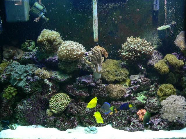 110 Gallon Reef P1040188