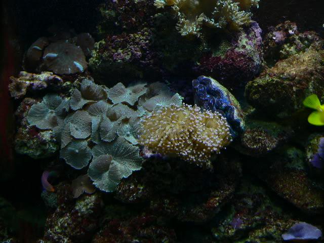 110 Gallon Reef P1040433-1