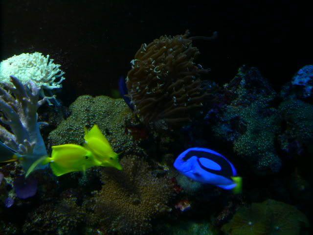 110 Gallon Reef P1040434-1