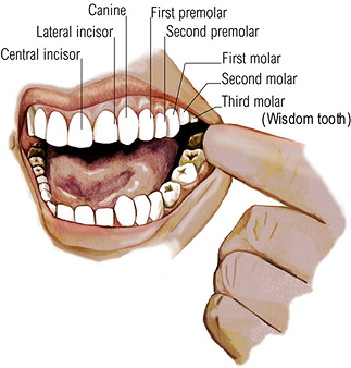 Dentist Badge Teeth