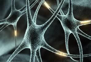 Sasori Clan Brain-neuron