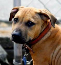 Pics of Your Pets WA27_14237204-1-pn