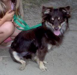 Pics of Your Pets WA410_14095348-1-pn