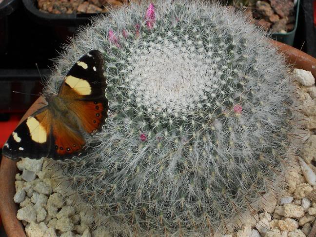 greenhouse critters Sert