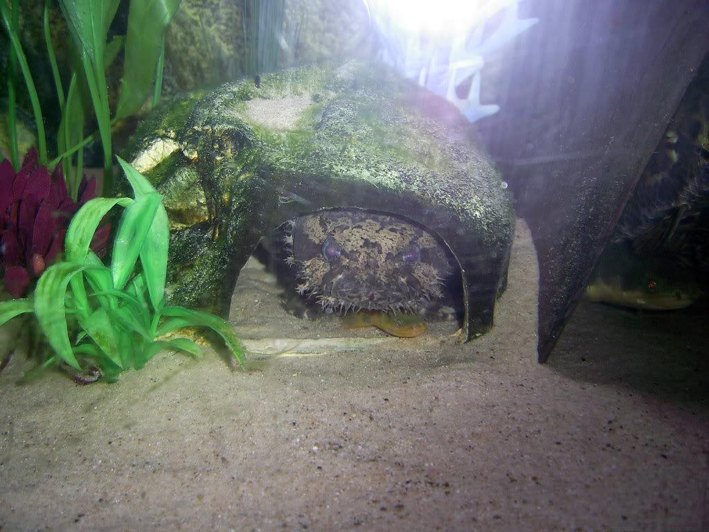 260 litre aquarium PIC_0109