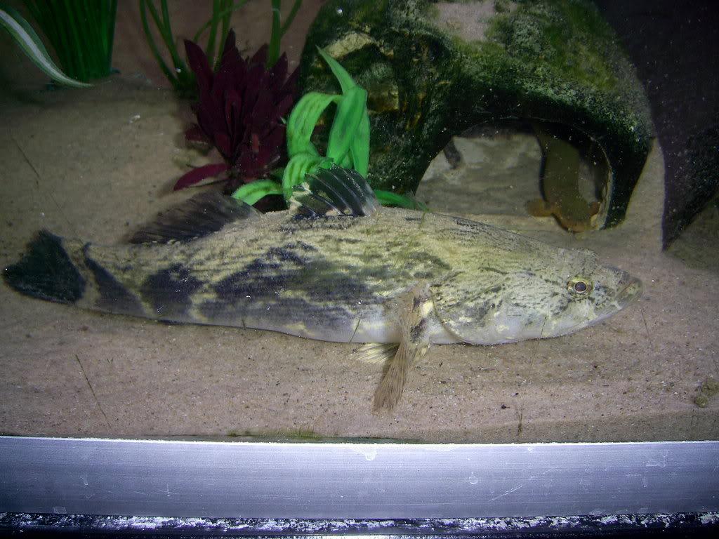 260 litre aquarium PIC_0139