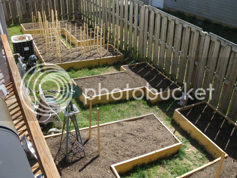 maze garden updates IMG_5860