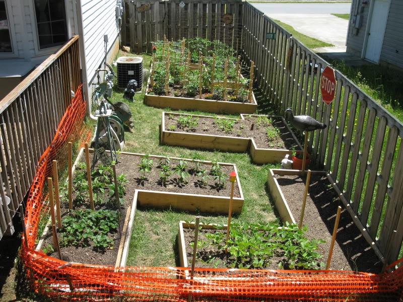 maze garden updates IMG_6227