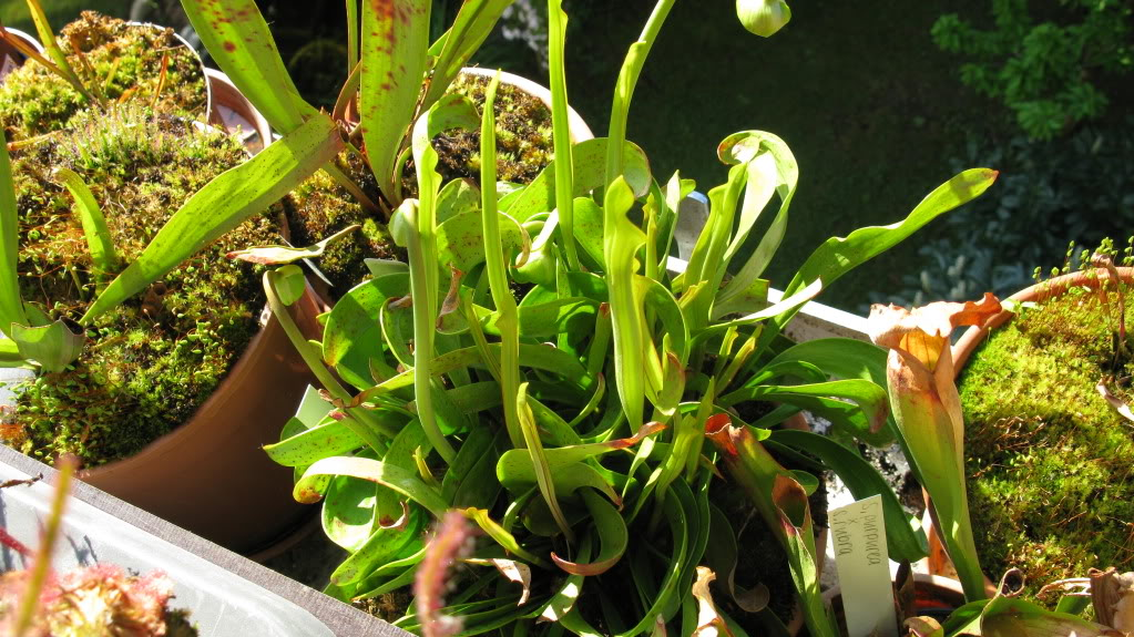 Mes plants.  IMG_0662