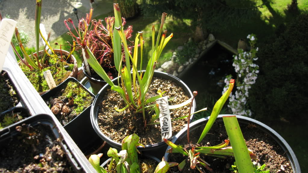 Mes plants.  IMG_0663