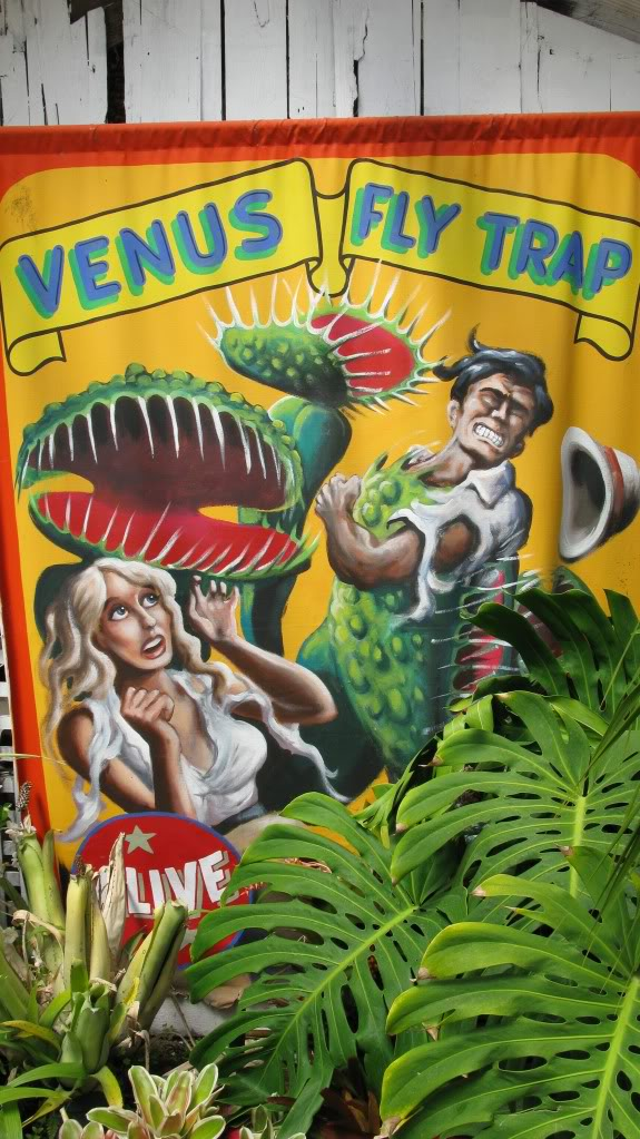 California Carnivores, le magazin (la pépinière?) de Peter D'Amato! IMG_0956