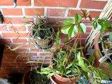 Mes plants.  Th_MVI_0661
