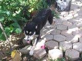 DORA E DUDA - 2 princesas caninas Th_Dora_19_10_10_a