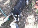 DORA E DUDA - 2 princesas caninas Th_Dora_19_10_10_c