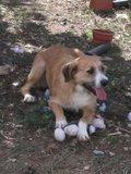 DORA E DUDA - 2 princesas caninas Th_Duda_19_10_10_j
