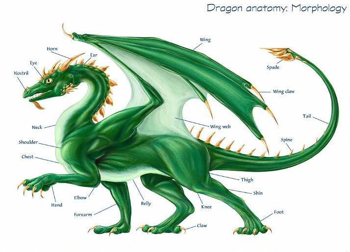 Mitos Naga DragonAnatomy02