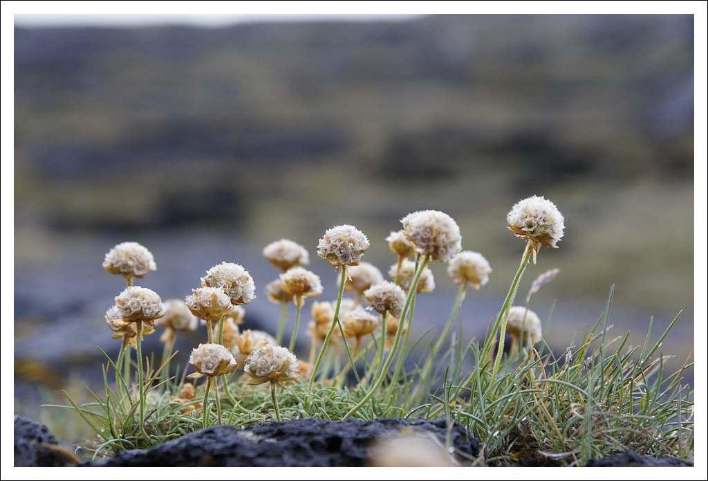 Un petit tour d'Islande... - Page 3 Isljour16_75p