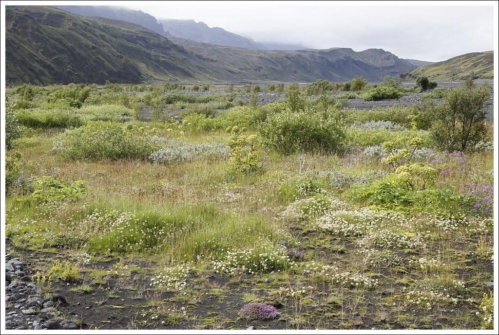 Un petit tour d'Islande... - Page 3 Isljour20_24p