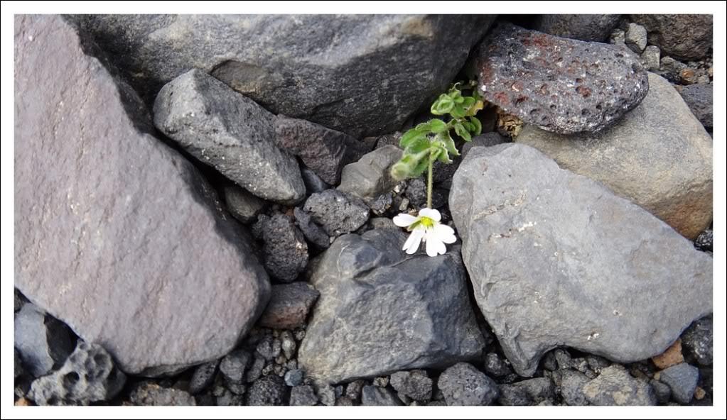 Un petit tour d'Islande... Isjour5_7