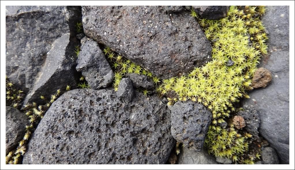 Un petit tour d'Islande... Isjour5_8