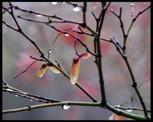 Mùa đông Houston (thơ ĐL dp) 01_zpszbcz0nx5