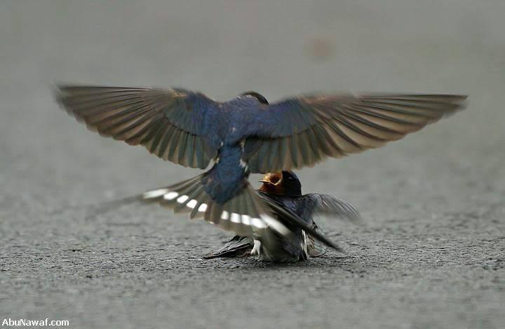 Tình Yêu Của 2 Con Chim Sẻ 02-7