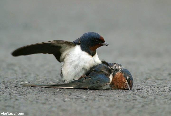 Tình Yêu Của 2 Con Chim Sẻ 03-7