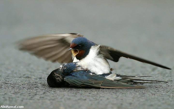 Tình Yêu Của 2 Con Chim Sẻ 04-8