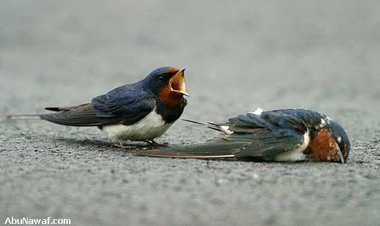 Tình Yêu Của 2 Con Chim Sẻ 05-7