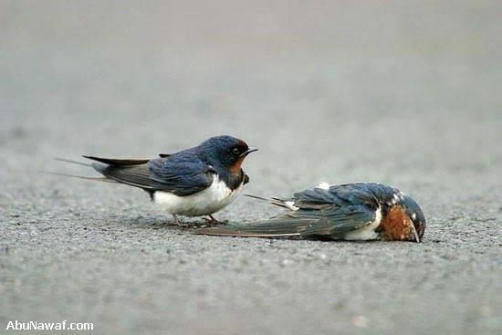 Tình Yêu Của 2 Con Chim Sẻ 06-6