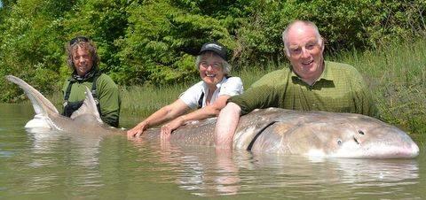 Con cá ... khủng 399860