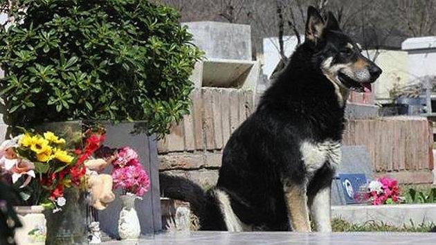 Lòng trung thành của loài chó DogGrave