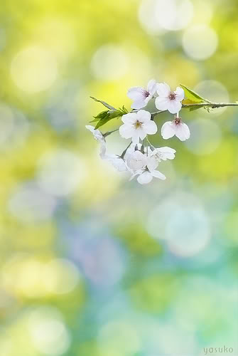 Hoa ơi...! (thơ) Hoa