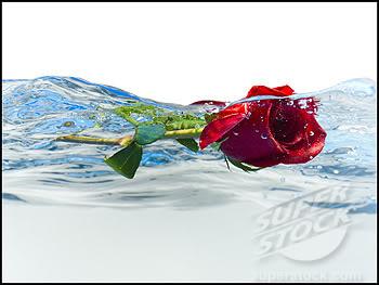 Cánh hoa xưa (thơ ĐL dp) SuperStock_1660R-15379