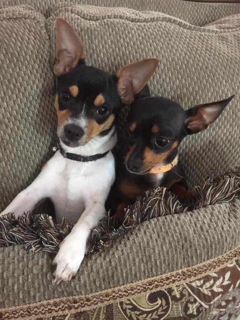 Hai con chó (tản mạn dp) Dog01_zpshzjlod9l