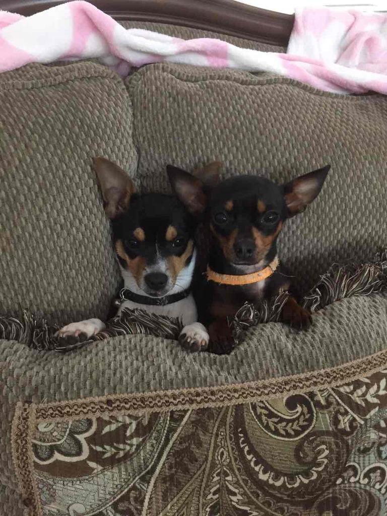 Hai con chó (tản mạn dp) Dog04_zpsavg0vuvi