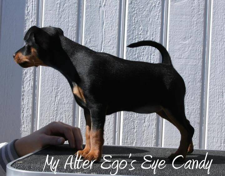 My Alter Ego's Eye Candy.  986fd6c6