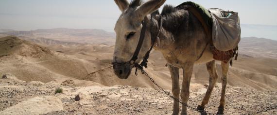 photo n-DONKEY-ISRAEL-large570_zps17394c73.jpg