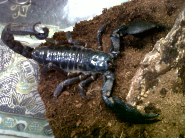 my scorpion collection is getting bigger LOL IMG-20120727-00094