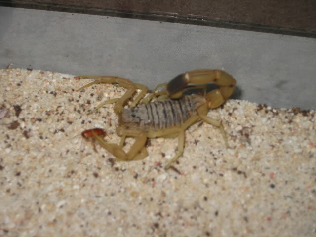 my scorpion collection is getting bigger LOL IMG_0614