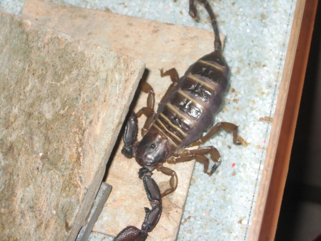 my scorpion collection is getting bigger LOL IMG_6275